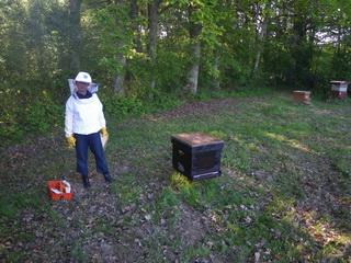 poser hausse de ruche essaimé sur autre ruche